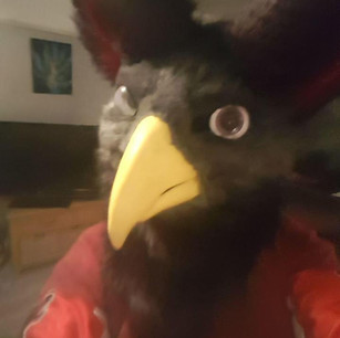 Gryphon head fursuit partial furry tailor mipsy avian bird