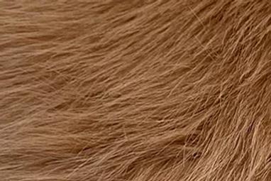 Savannah Howl Fox - Half Yard Piece