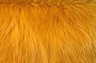 Howl Lion Gold Fox - Quarter Yard Piece