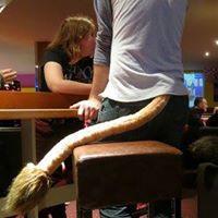 Fursuit costume lion tail