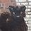 Thumbnail: Feline Cat Snow Leopard 3d Printed Fursuit Head Base