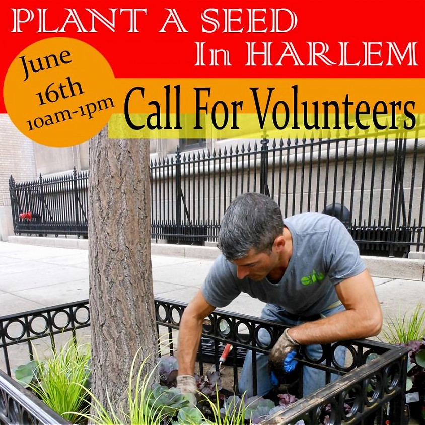 Plant a Seed in Harlem