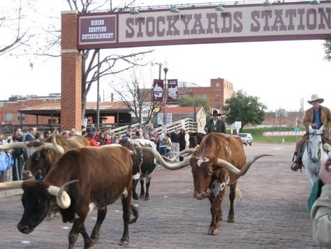 Fort_Worth_TX-Herd_Cattle_Drives