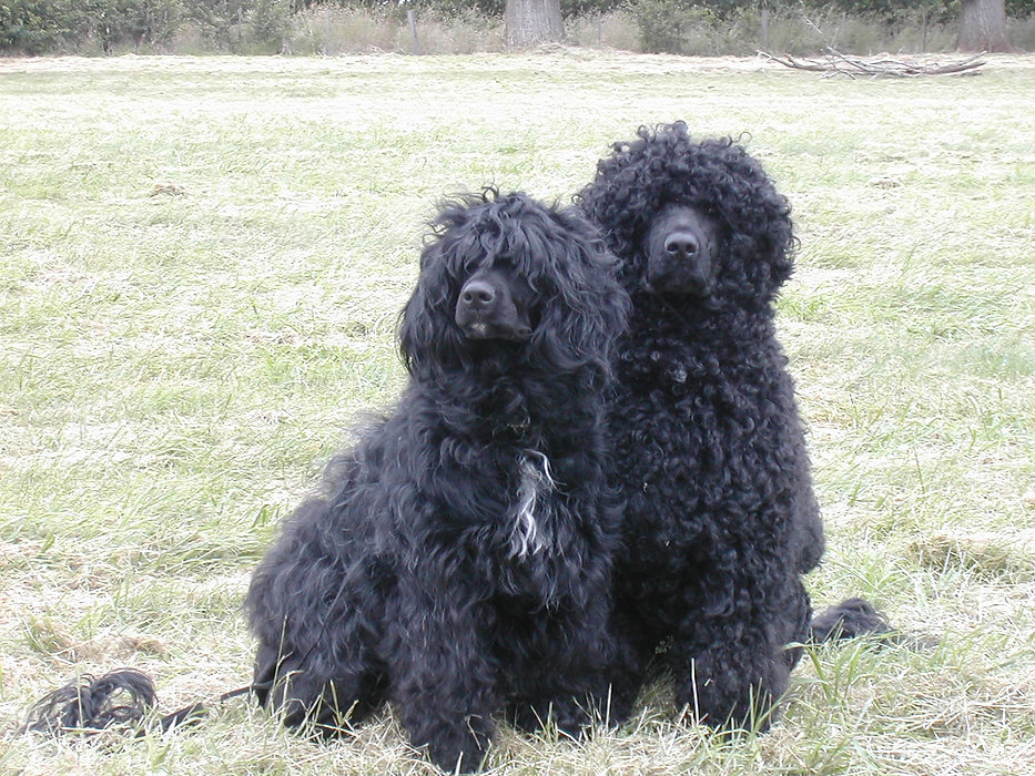 Two black dogs sitting side by side.jpg