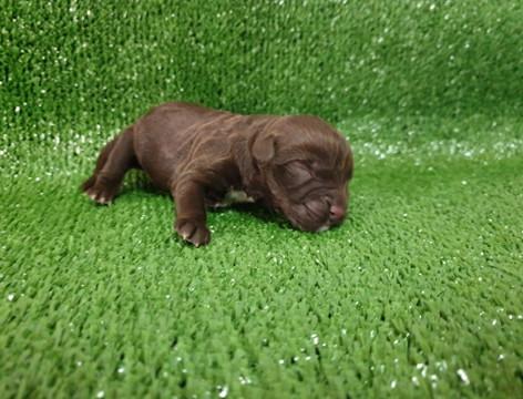 Brown boy sleeping