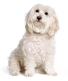Disgruntled grandchildren and Trouble – the millionaire pooch