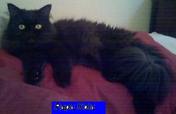 Papa Kola (Retired)
