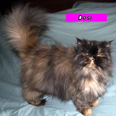 Miss Desi (Retired)