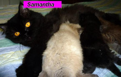 Miss Samantha