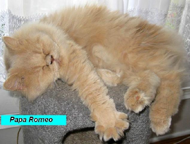 Papa Romeo