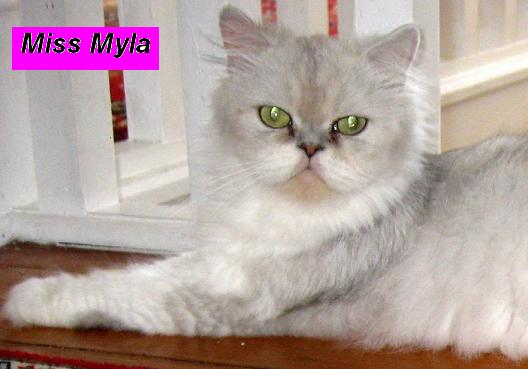 Miss Myla (Retired)