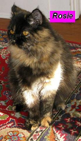Miss Rosie (Retired)