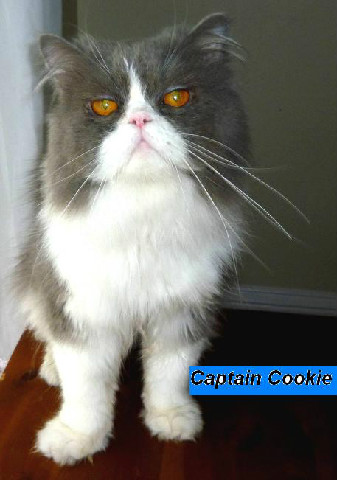 Captain Cookie (Retired)