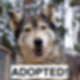 Lassie_–_ADOPTED.jpg