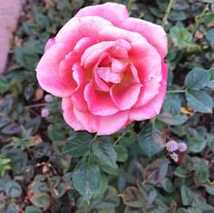 Plantas Ornamentais1.jpg
