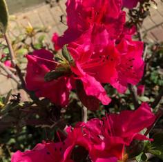 Plantas Ornamentais8.jpg
