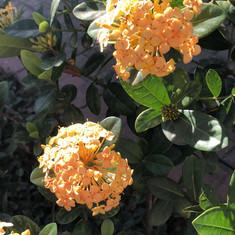 Plantas Ornamentais.jpg