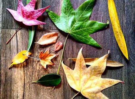 Seasons & Colors