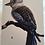 Thumbnail: Kookaburra Card