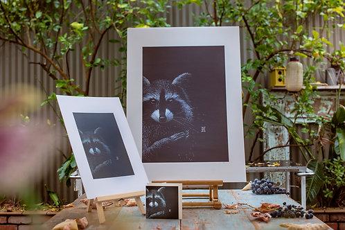 Raccoon   A3 & B3
