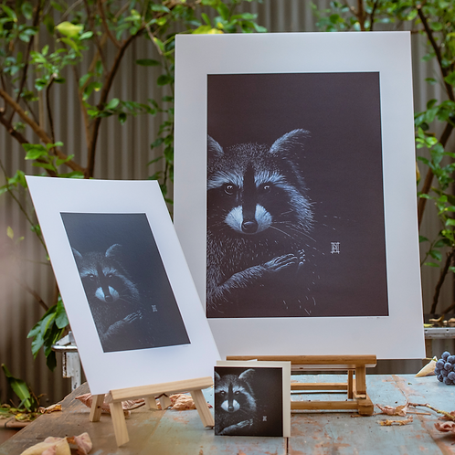 Raccoon - Large Format