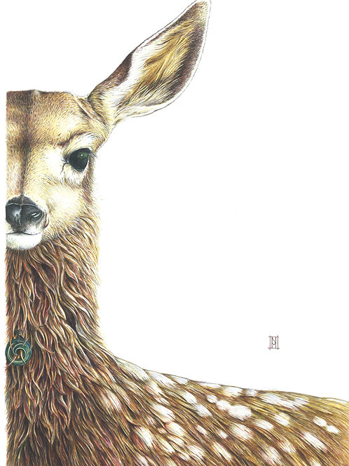 Willow the fawn Card