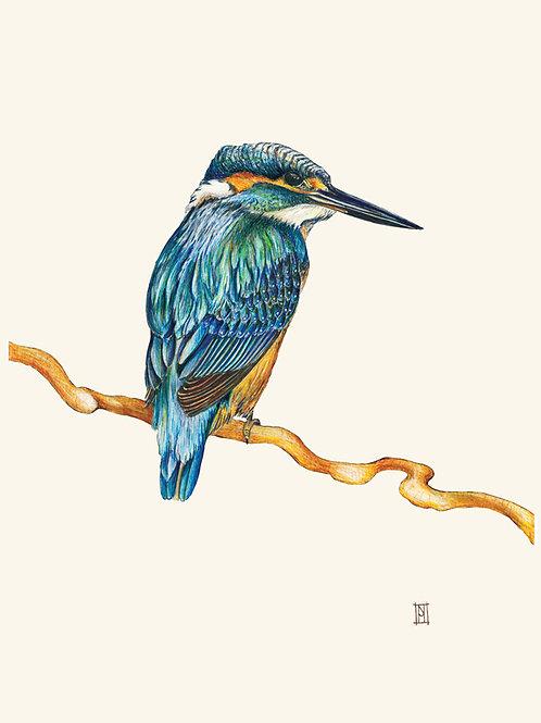 Kingfisher - Large Format