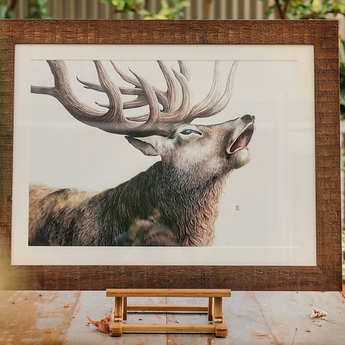 Stag - Large Format
