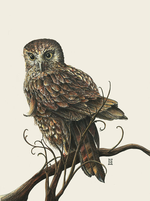 Morepork Mini Card