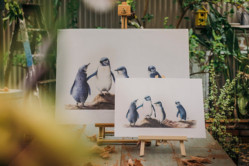 Penguins - Large Format
