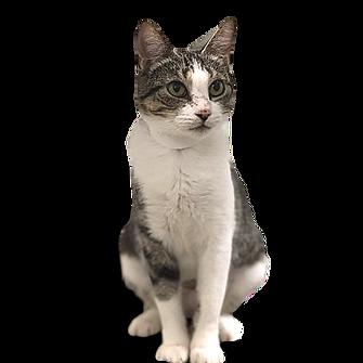jesscat_adoptimize_llc_finished_-5xd7nya