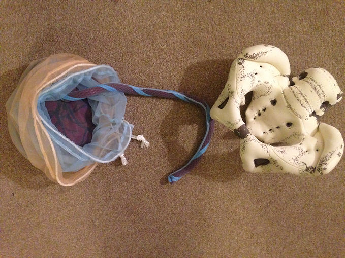 A model of a pelvis and a placenta for antenatal education classes in Dulwich, Herne Hill and Crystal Palace