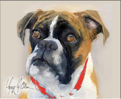 Dog in red collar.jpg