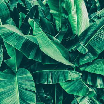 Bay_Pflanzen.jpg