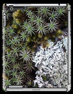 lichen moss ipad.png