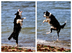 All Singing, All Dancing Wonder Dog