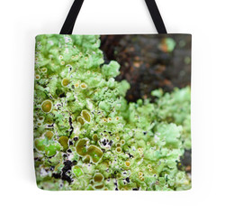 A Liking for Lichen