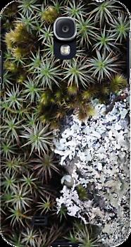 lichen moss galaxy.png