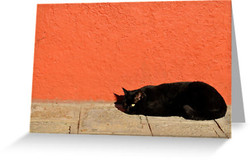 Black Cat Red Wall