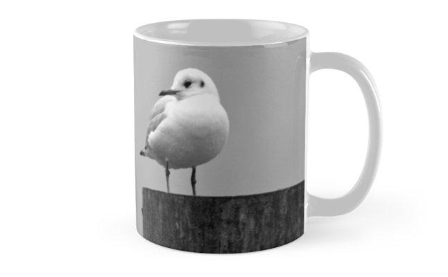 Gull Gazing