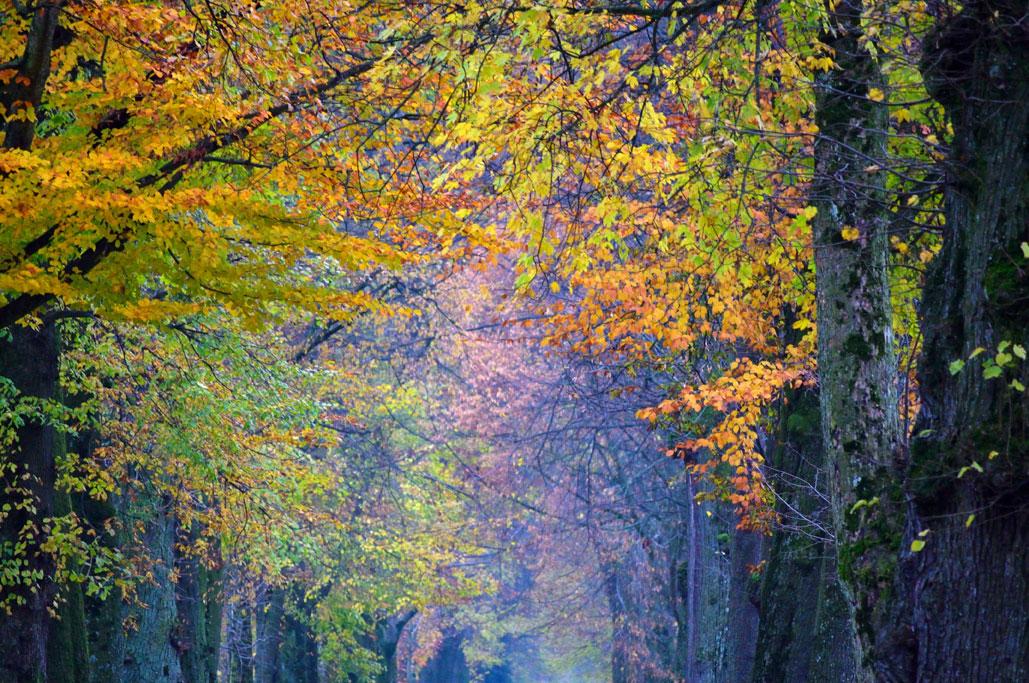 Misty Autumn Leaves