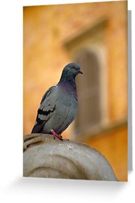 Posing Pigeon