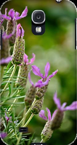 italian lavender galaxy.png