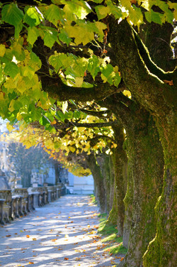Autumn Sun, Salzburg