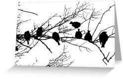 Sparrow Line Up