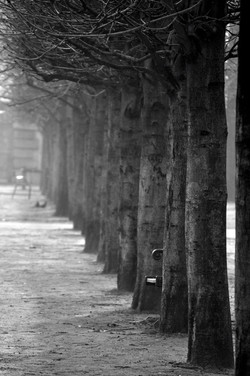 Misty Tuileries