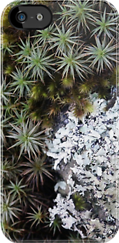 lichen moss iphone.png