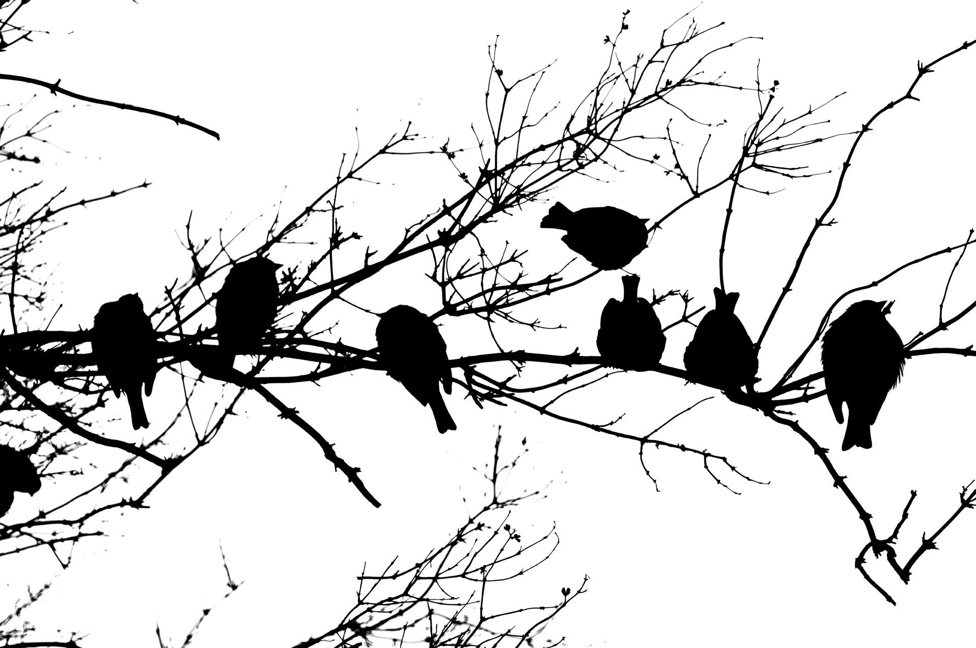 Sparrow Line-Up
