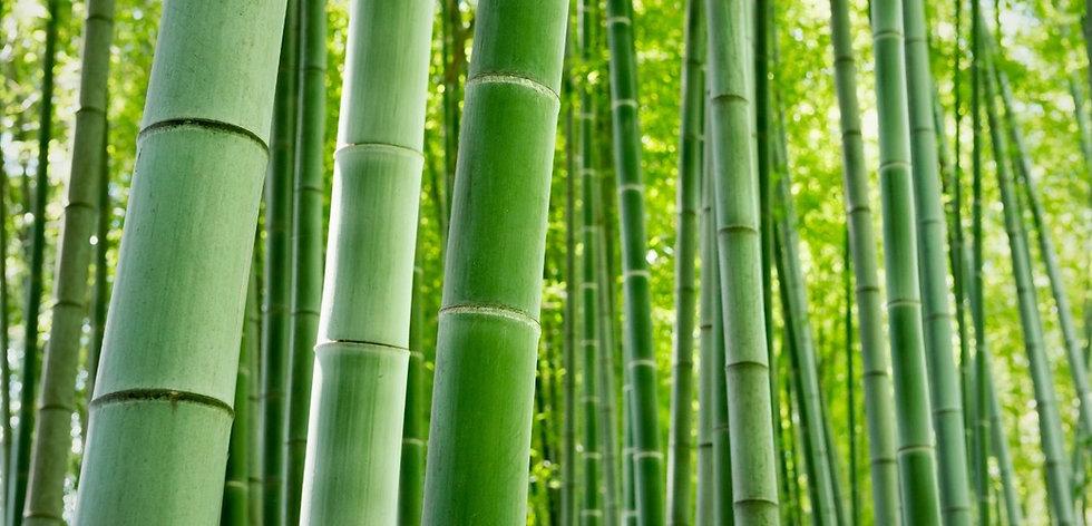 nymphea bien etre bambou.jpeg