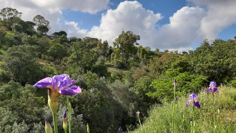 The beautiful Algarvian hills